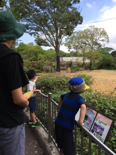 豊橋動物園